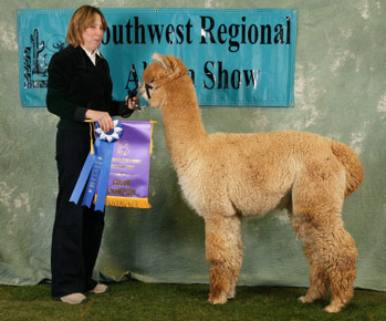 Deb Hill with Fandago at an Alpaca Show